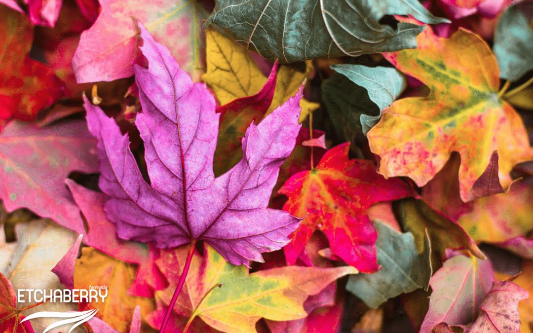 ¿Qué vitaminas necesitas en otoño?