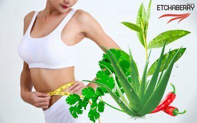 Plantas para bajar peso